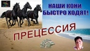 ПРЕЦЕССИЯ ПОЗДРАВЛЕНИЕ ПАРТНЕРА С ВЫХОДОМ В VIP С ДОХОДОМ 400 000 РУБ.