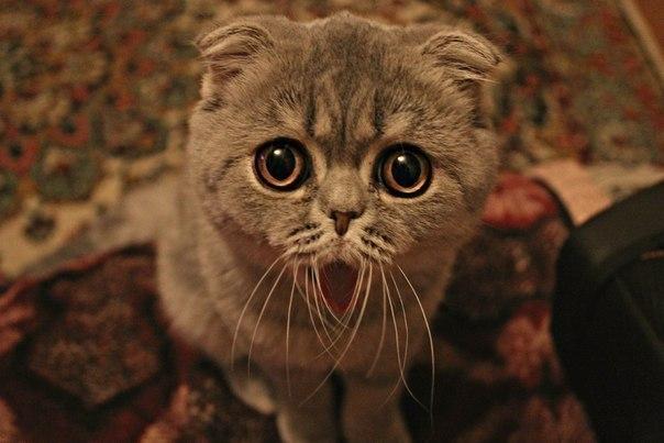 кошки инь янь фото