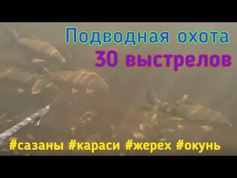 Подводная охота 30 выстрелов: Сазан, Карась, Жерех и Окунь