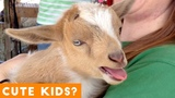 Cutest Baby Goat Compilation Ever! | Funny Pet Videos