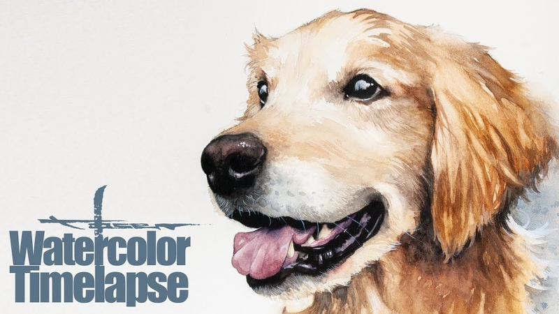 Watercolor [Speed painting - Timelapse] Dog Portrait Yuri Golden Retriever