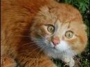 эти ржачные коты, собаки и прочие животные, подними себе настроение, посмотри видео от PromoZP