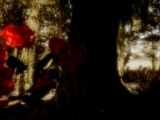 Nick Cave The Bad SeedsKylie Minogue - Where The Wild Roses Grow
