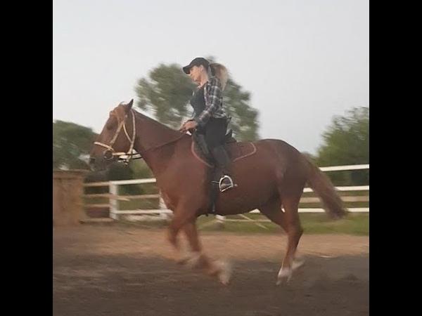 Выпуск 2 Подготовка лошади к верховой езде )