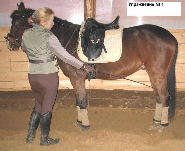 Проблемы в работе с лошадью (подборка вопросов