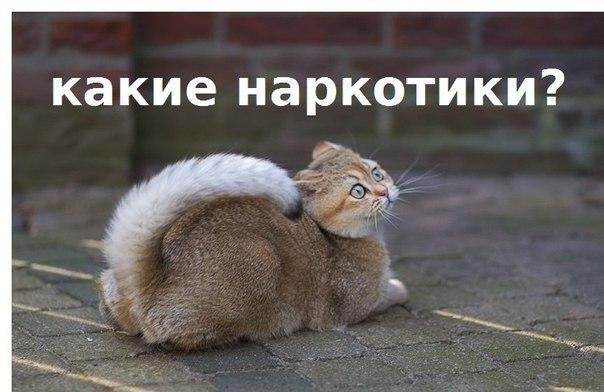 кончаешь фото: