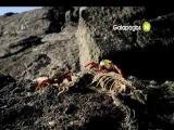 Галапагосы на Viasat Nature
