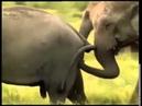 Забавный секс у животных Приколы из сексуальной жизни животных 2015