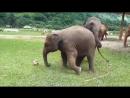 Футбол и слоники