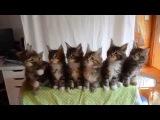 Семь котят реагируют в унисон