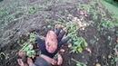 Домик в деревне 31 ..... картофелекопалка ккм 1