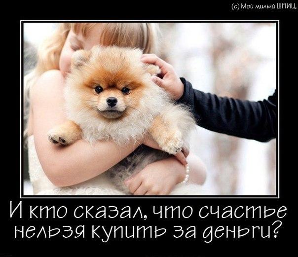 http://cs421420.vk.me/v421420007/3105/GpusCizazNo.jpg