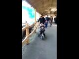 Гоним в зоопарке )