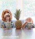 3-летний усыновлённый мальчик и пёс из приюта – лучшие друзья.
