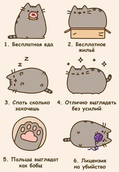 Идеи для лд кот