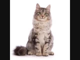 Взросление котика